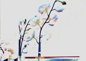 Lightspinner