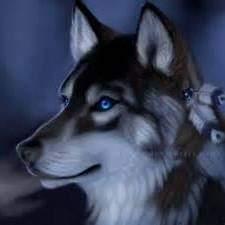 Alpha_wolf1