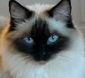 Kittencat185