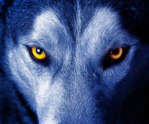 Wolfslayer96