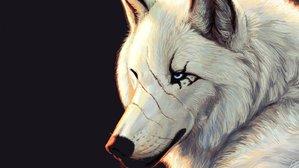 wolf.echo