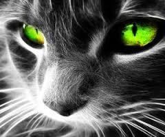 emeraldkats7