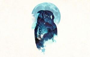 Midnight_Owl