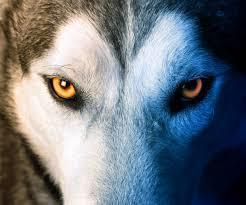Wolfbaine
