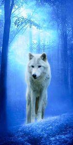 wildwolfgirl