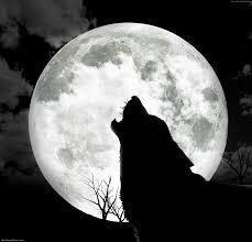 wolf123