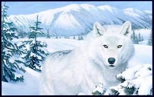 wolfy2004