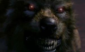 kingwolf2