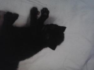 catladyrosa