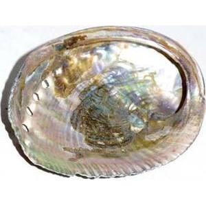 Green Abalone Shell incense Burner Polished