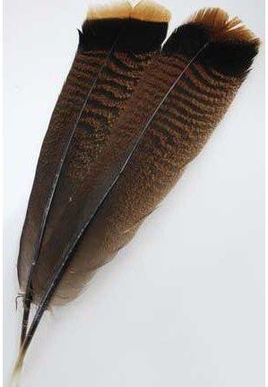 Bronze Turkey Tail Feather