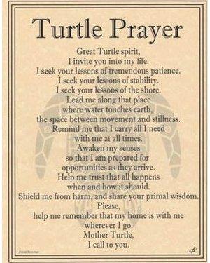 Turtle Prayer Poster