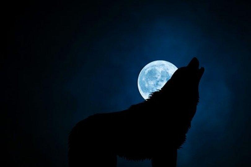 Were-Wolf Spells - Free Magic Spells